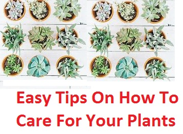 Easy Tips On How To Care For Your Plants